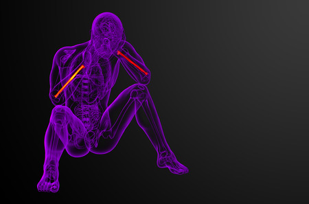 raggio: 3d render medical illustration of the radius bone - front view