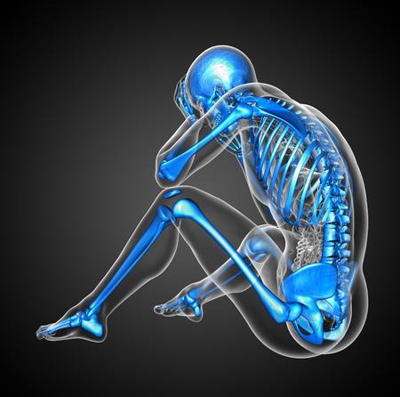 huesos humanos: 3d ilustración médica del esqueleto humano - vista lateral Foto de archivo