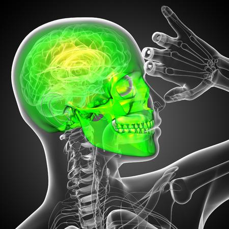 ethmoid: 3d render medical illustration of the skull - side view