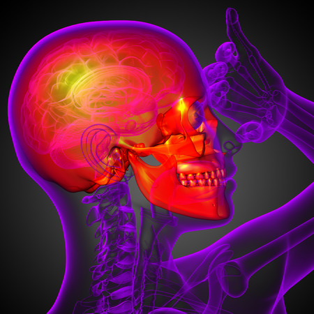 mandible: 3d render medical illustration of the skull - side view