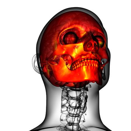 ethmoid: 3d render medical illustration of the skull - bottom view