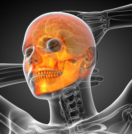 maxilla: 3d render medical illustration of the skull - bottom view