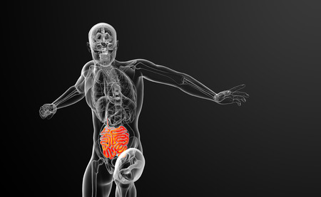 human small intestine: 3d rendered illustration of the small intestine - front view