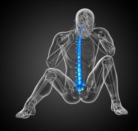 vertebra: 3d render medical illustration of the human spine - front view Stock Photo