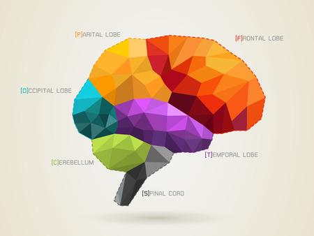 Vector illustratie van een brein icoon Stockfoto - 43761516