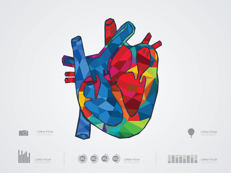 with aorta: vector illustration of heart