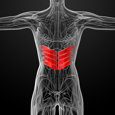 inferior: medical  illustration of the serratus posterior inferior Stock Photo