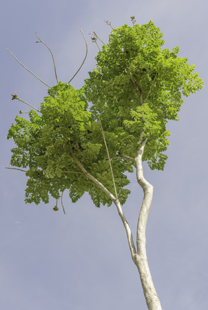 clody: Tree under the dark clody sky