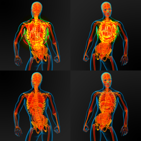 3d render illustration of the male anatomy Stock Photo