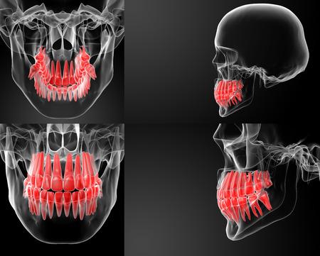 3D-rendering schedel met zichtbare rode tanden