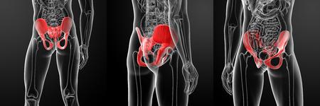 proximal: 3D rendering illustration of human pelvis Stock Photo