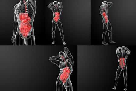 3D rendering of the human digestive system