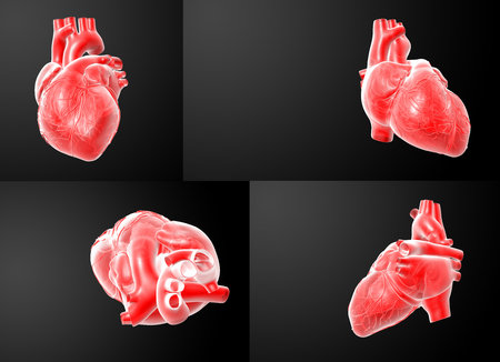 tricuspid valve: 3D rendering of the  red Heart Stock Photo