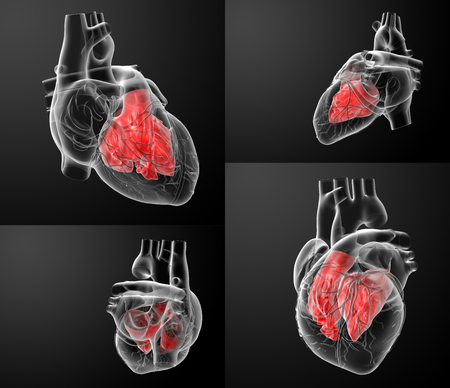 tricuspid valve: 3D rendering of the Heart atrium Stock Photo