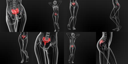 sacrum: 3D rendering medical illustration of the sacrum bone Stock Photo
