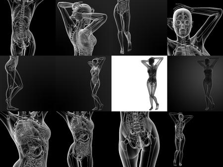 ilium: 3D rendering illustration of the female anatomy
