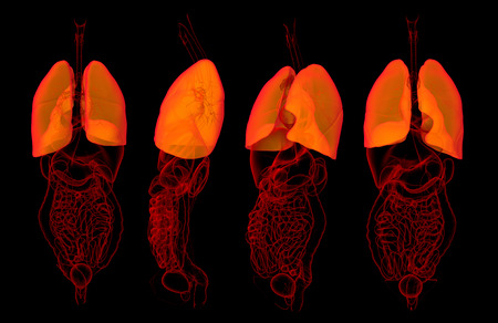 3D rendering medical illustration of lungs Stock Photo