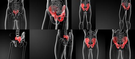 sacrum: 3D rendering illustration sacrum bone Stock Photo