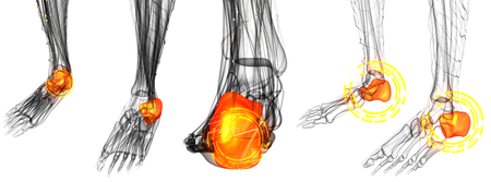 3d render illustration of the Human Foot Joint Pains