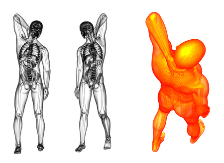 3d rendering illustration of the human anatomy Stock Photo
