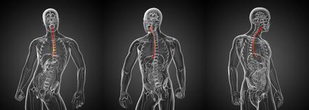 esophagus: 3d rendering illustration of the esophagus
