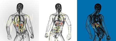 suprarrenales: 3d rendering medical illustration of the  adrenal  pain