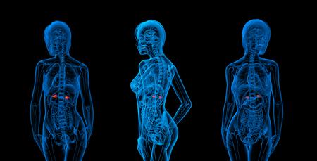 suprarrenales: 3d rendering medical illustration of the adrenal