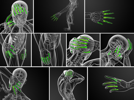phalanges: 3d rendering illustration of the human phalanges hand