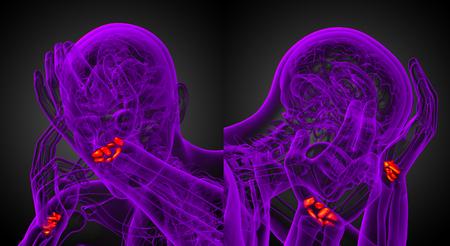 Representación 3D ilustración de los huesos del carpo humano