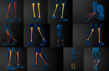 Representación 3D Ilustración Médica Del Hueso De La Tibia Fotos ...