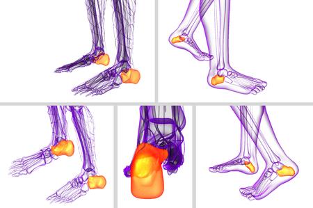 3d rendering medical illustration of the calcaneus bone Stock Photo
