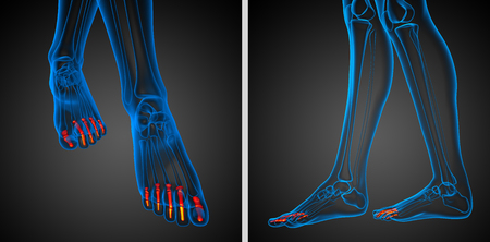 phalanges: 3d rendering illustration of the human phalanges foot Stock Photo