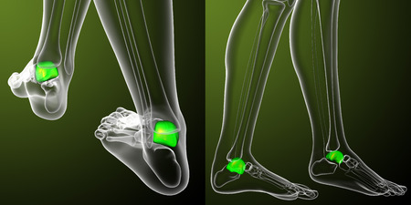 3d rendering medical illustration of the talus bone Stock Photo