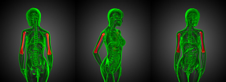 3d rendering medical illustration of the humerus bone