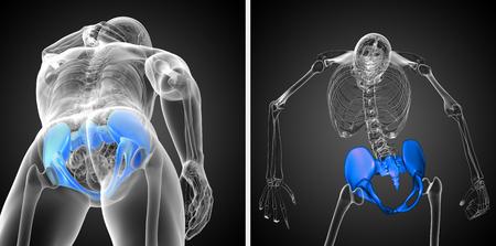3d rendering medical illustration of the pelvis bone