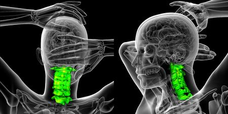 3D-rendering medische illustratie van de cervicale wervelkolom