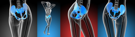 pelvis: 3D rendering medical illustration of the pelvis bone