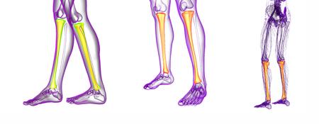 3d rendering medische illustratie van het tibia bot Stockfoto