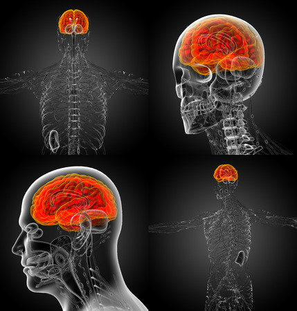 3d rendering medical illustration of the brain Stock Photo