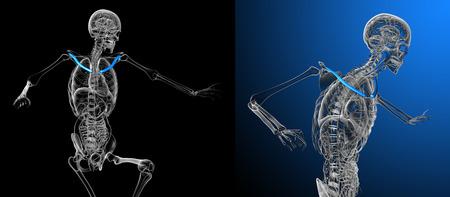 3d rendering medical illustration of the clavicle bone