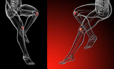 3d rendering medical illustration of the patella bone