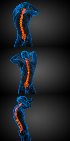 lumbar: 3d rendering medical illustration of the human spine