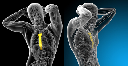 3d rendering medical illustration of the sternum bone Stock Photo