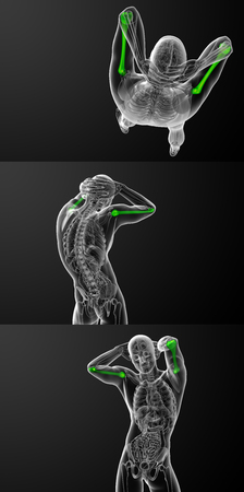 3d rendering medical illustration of the humerus bone