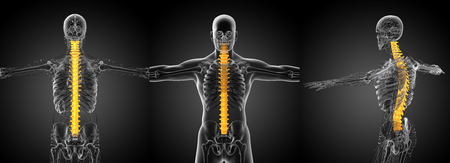 3d rendering medical illustration of the human spine