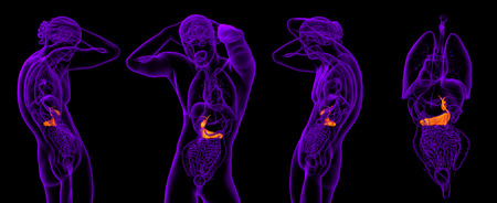 3d rendering medical illustration of the gallblader and pancrease Stock Photo
