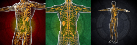 3d rendering illustration of the male lymphatic system Stock Photo