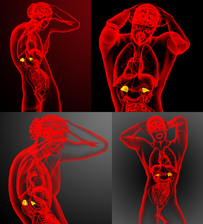 3d rendering medical illustration of the adrenal