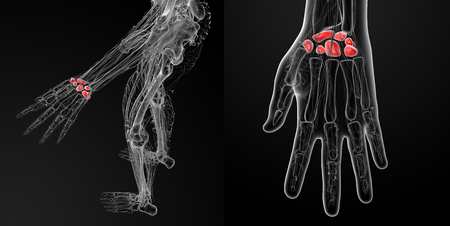 Ilustración de renderizado 3D de los huesos del carpo humano Foto de archivo