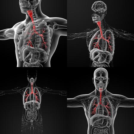 bronchi: 3D rendering illustration of the male bronchi